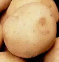 Плавающий картофель