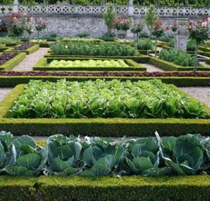 Поради по саду і городу