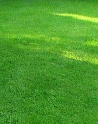 зелений газон