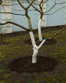 Пошкодження кори дерев