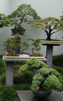 особливості догляду за карликовими деревами в саду
