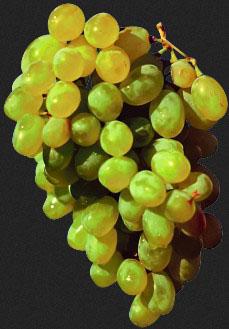 Обрізка виноградних кущів
