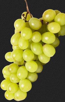 Типи формировок виноградних кущів