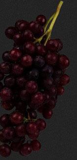 Культури винограду