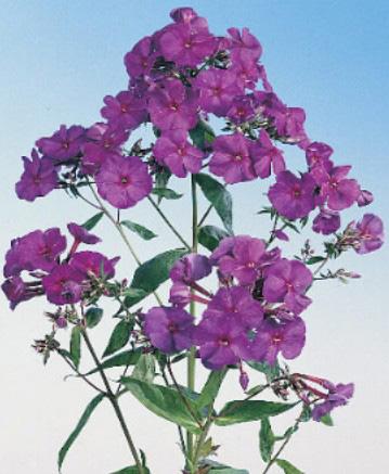 импорт цветов