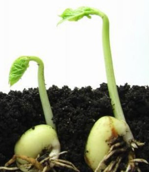 грунт растительный с доставкой