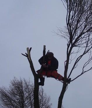 кронирование деревьев стоимость