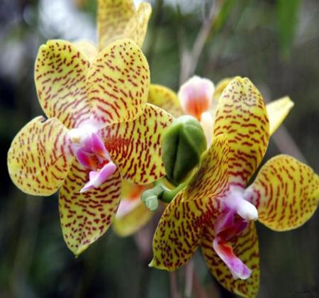 заказать Орхидеи дешево