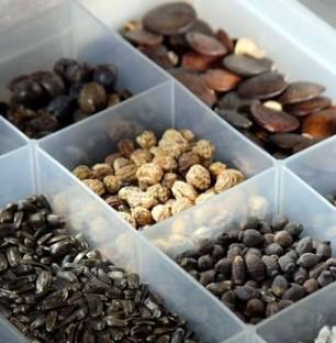купить семена в Украине