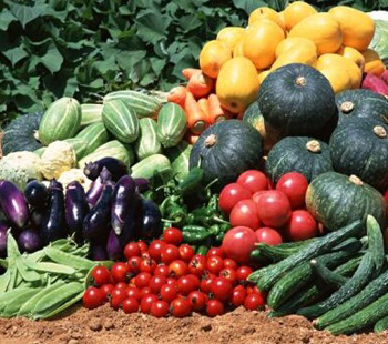 семена овощных культур