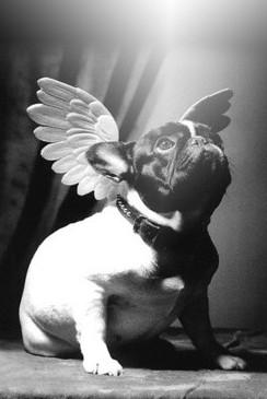 ритуальная служба для домашних животных ЗООВЕТРИТУАЛ