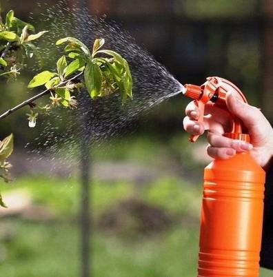 обработка растений весной