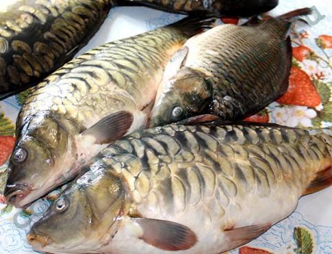 рыба мелким оптом