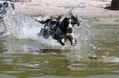 как проводить состязания среди собак