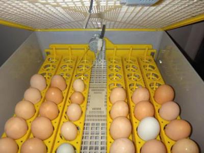 купить инкубатор на 300 яиц, цена