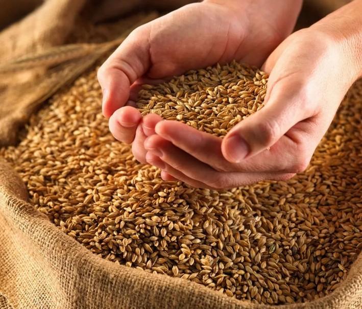 оценка зерновых культур