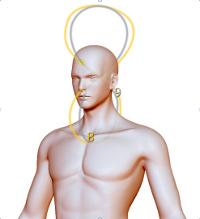 Сердечно-мозговой комплекс