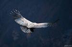 Архангел Метатрон  - 2014: Орел, Кондор и возвращение Истины