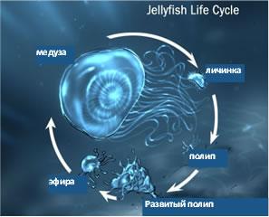 Цикл развития SPE